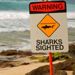 Four Shark Attacks in Hawaii in One Month?